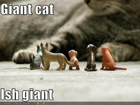 Giant cat  Ish giant