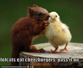 lolcats eat cheezburgers. pass it on...