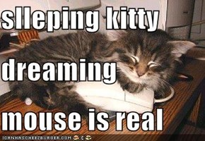 slleping kitty  dreaming mouse is real