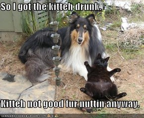So I got the kitteh drunk.  Kitteh not good fur nuttin anyway.