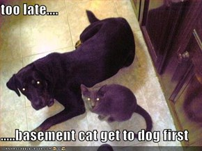 too late....  .....basement cat get to dog first