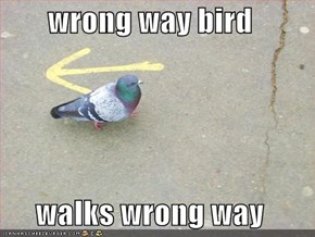 wrong way bird  walks wrong way