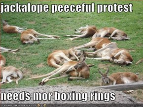 jackalope peeceful protest  needs mor boxing rings