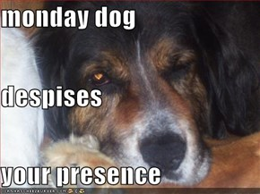 monday dog despises  your presence