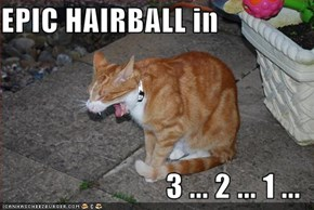 EPIC HAIRBALL in  3 ... 2 ... 1 ...