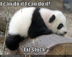 I can do it I can do it!  I iz stuck.