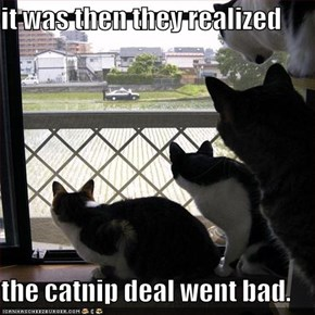 it was then they realized  the catnip deal went bad.