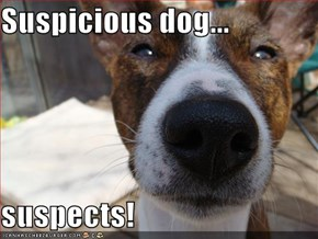 Suspicious dog...  suspects!