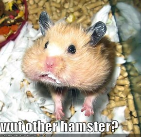 wut other hamster?