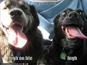 high on life                                      high