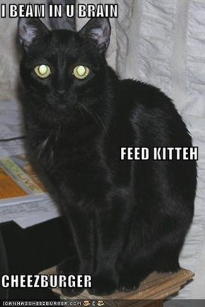 I BEAM IN U BRAIN FEED KITTEH CHEEZBURGER
