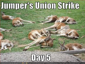 Jumper's Union Strike  Day 5