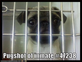 Pugshot of inmate #47238