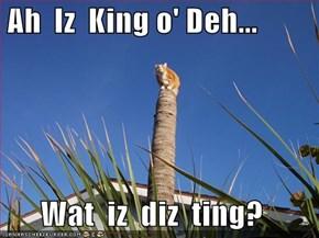 Ah  Iz  King o' Deh...  Wat  iz  diz  ting?