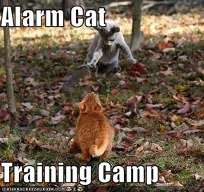 Alarm Cat  Training Camp