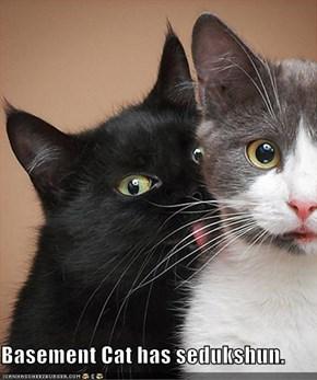 Basement Cat has sedukshun.