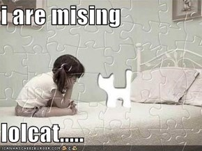 i are mising  lolcat.....