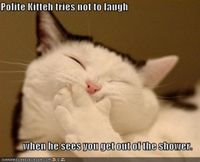 Polite Kitteh tries not to laugh  when he sees you get out of the shower.