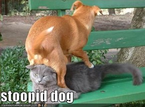 stoopid dog