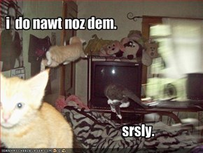 i  do nawt noz dem.