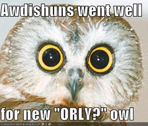"Awdishuns went well  for new ""ORLY?"" owl"