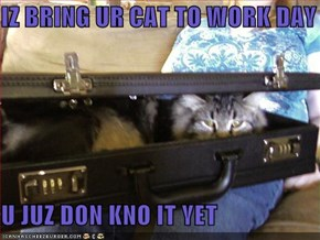 IZ BRING UR CAT TO WORK DAY  U JUZ DON KNO IT YET