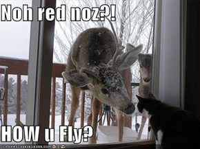 Noh red noz?!  HOW u Fly?