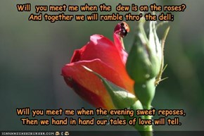 Will  you meet me when the  dew is on the roses?And together we will ramble thro' the dell; Will you meet me when the evening sweet reposes,Then we hand in hand our tales of love will tell.
