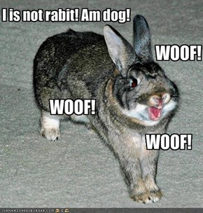I is not rabit! Am dog!