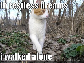 in restless dreams  i walked alone