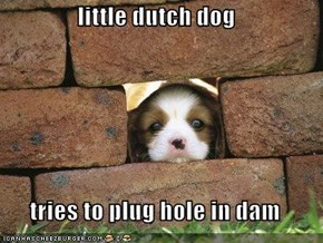 little dutch dog  tries to plug hole in dam