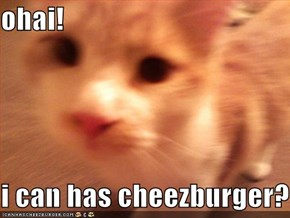 ohai!  i can has cheezburger?