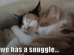 we has a snuggle...