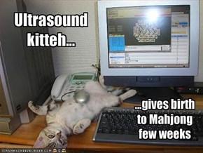 Ultrasound kitteh...