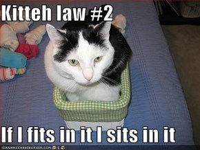 Kitteh law #2  If I fits in it I sits in it