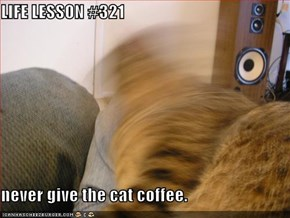 LIFE LESSON #321  never give the cat coffee.