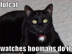 lolcat  watches hoomans do it