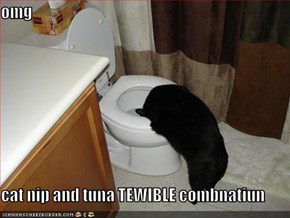 omg  cat nip and tuna TEWIBLE combnatiun