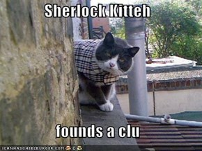 Sherlock Kitteh  founds a clu