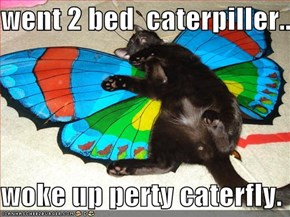 went 2 bed  caterpiller...  woke up perty caterfly.