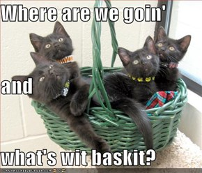 Where are we goin' and what's wit baskit?
