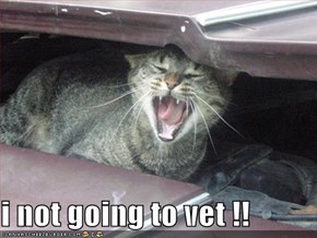 i not going to vet !!