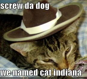 screw da dog  we named cat indiana