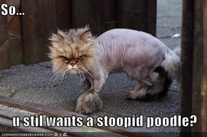 So...  u stil wants a stoopid poodle?