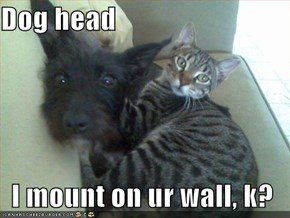 Dog head  I mount on ur wall, k?