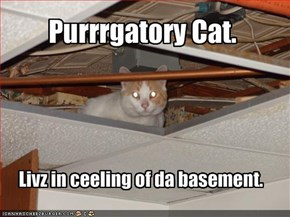 Purrrgatory Cat.