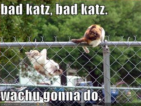 bad katz, bad katz.  wachu gonna do.