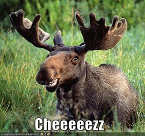 Cheeeeezz