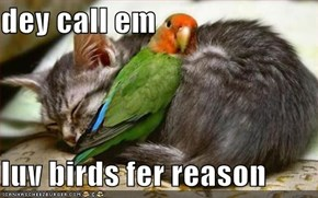 dey call em   luv birds fer reason
