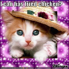 I can has fried chicken?
